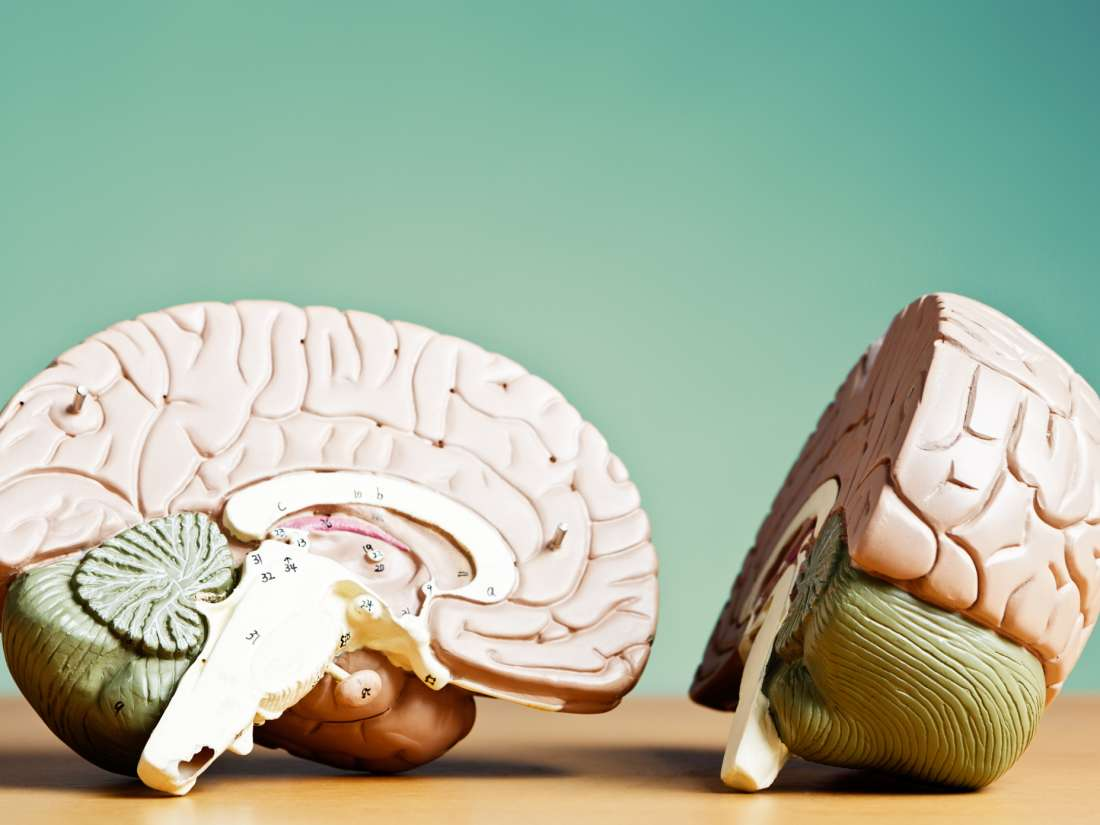 Left brain vs. right brain: How does one dominate?