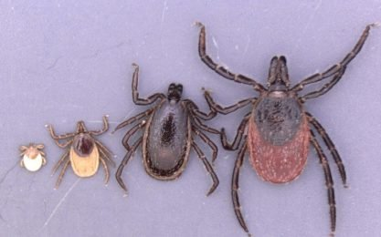Upcoming ticks Invasion in 2019: Researchers warn of new Vectors of viruses