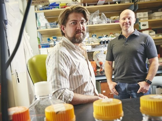 Research shows gut microbiome protects against acute arsenic toxicity