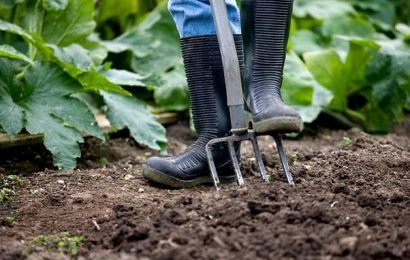 GP surgery prescribing allotments to help treat stress issues