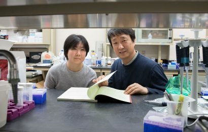 Researchers discover new contributor to age-related hearing loss