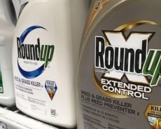 Second US jury finds Roundup weed killer caused cancer