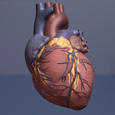 Glucosamine supplements may be linked to lower risk of cardiovascular disease