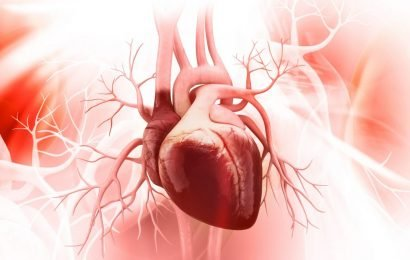 Heart study: so Far completely unknown Mini-proteins are the heart-to-fuel