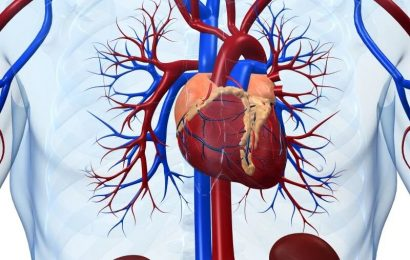 Serelaxin does not lower CV death in acute heart failure