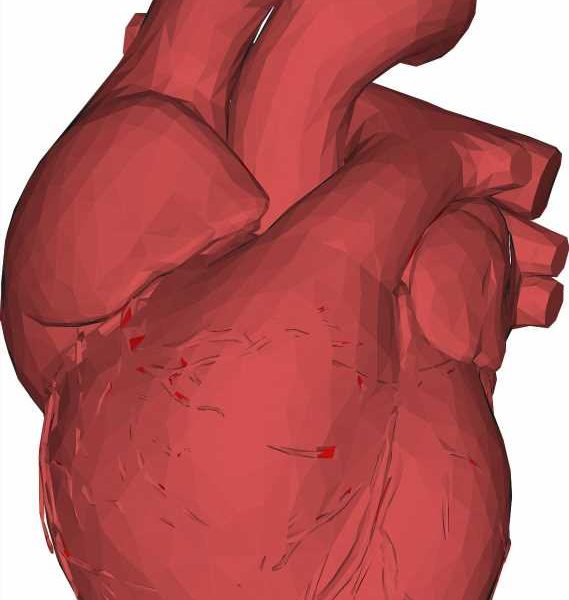 New insights into the healing capacity of the heart