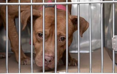 28 Dogs Rescued from Suspected Dogfighting