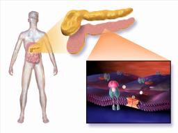 Rotavirus infection may turn on type 1 diabetes