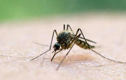 Leads to fever and malformations: Zika Virus is transmitted for the first time in Europe