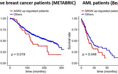 A step closer to cancer precision medicine