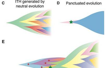 Understanding the diversity of cancer evolution based on computational simulation