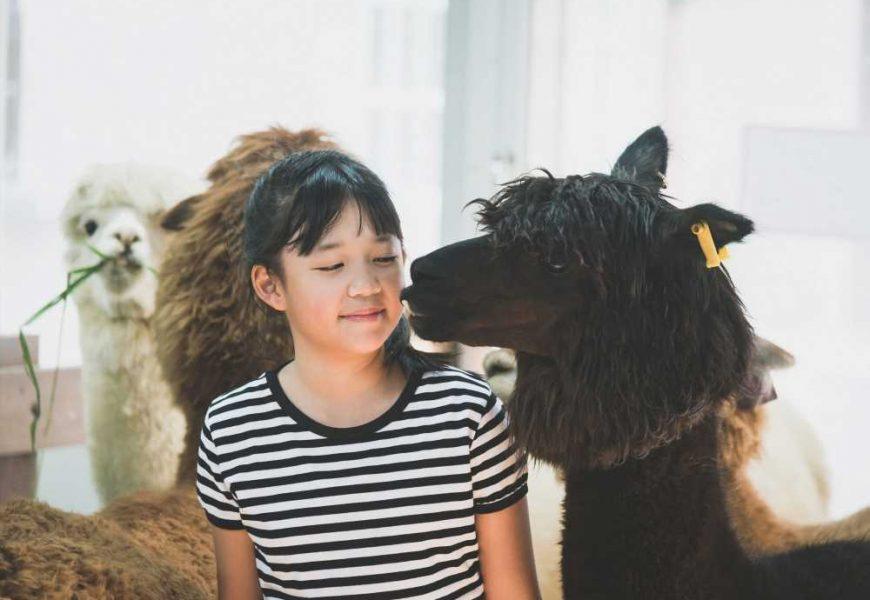 With Lama antibodies against the Coronavirus?