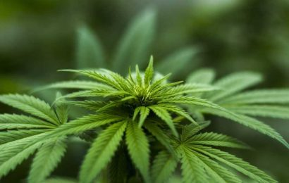 Study finds heavy cannabis use affects human genome