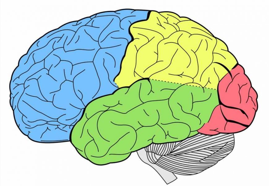 Faulty brain processing of new information underlies psychotic delusions, finds new research