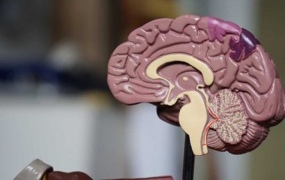 Study reveals greater excitability in social brain regions of autistic men compared to women