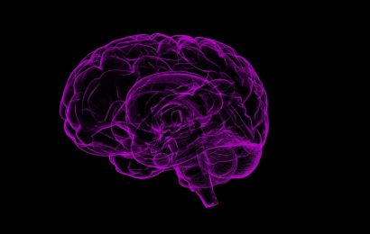 Researchers explore how the human brain is so resilient