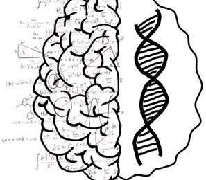 How genetic variation gives rise to differences in mathematical ability