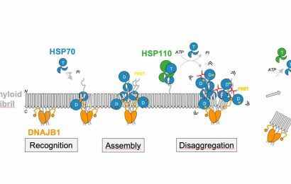 How molecular chaperones dissolve protein aggregates linked to Parkinson's disease