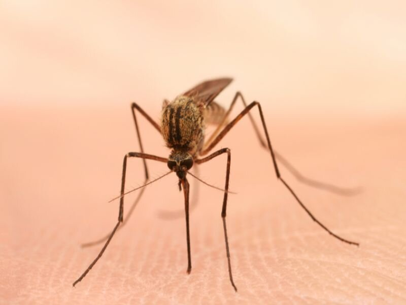CDC: 21,869 west nile virus cases identified in U.S. in 2009 to 2018