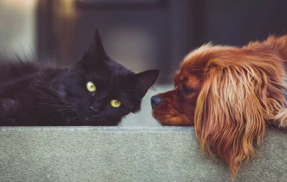 4 ways pets are good for your health and well-being