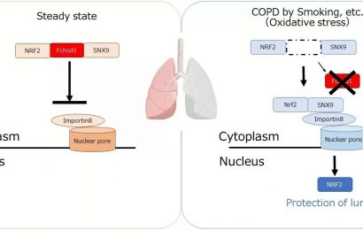 Emphysema research narrows in on FCHSD1 protein