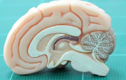 UT Austin statisticians develop new way to model how the brain learns language