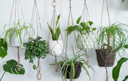 Houseplants That Thrive Without Much Sunlight